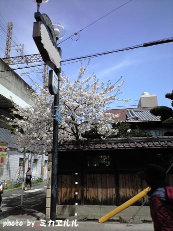 10.04桜4、CA391010