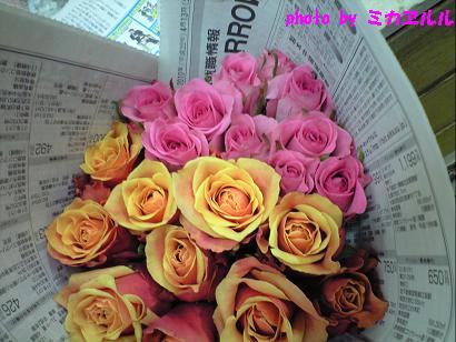 10.04春のばらCA391028