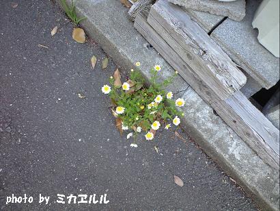 10.04道端・ノースポールCA391041
