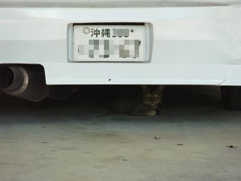 琉球猫7 009
