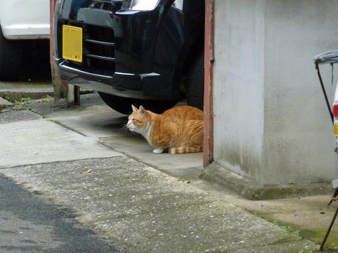 壱岐の猫 06