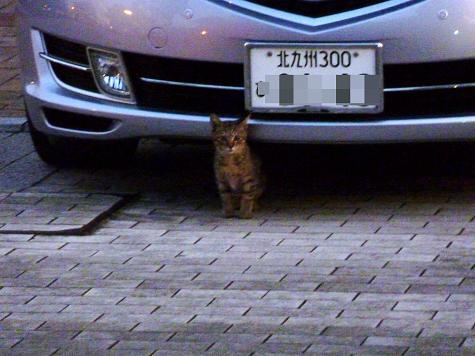小倉猫14