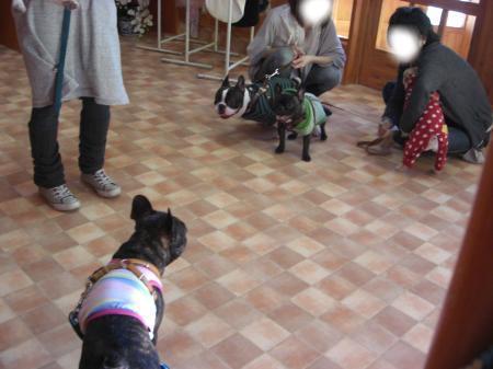 snap_doubull_201032121148.jpg