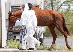 mai_20110503k0000m040094000c相馬の馬