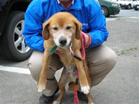 n2011050701福島保護犬