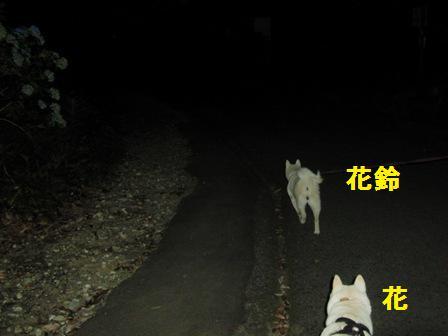 7.16夜の小田原城址公園3