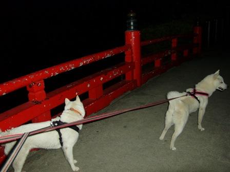 7.16夜の小田原城址公園1