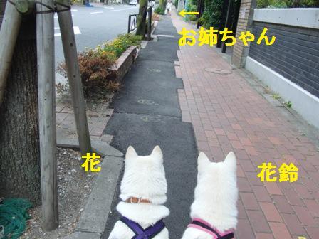 7.18お姉ちゃんお迎え1