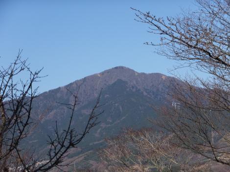 権現山から大山を望む