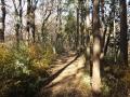 弘法山登山道