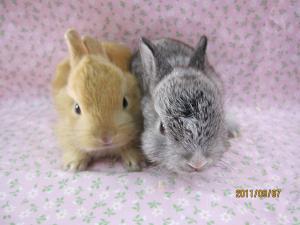 ミニウサギ0906