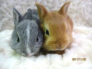 ミニウサギ1107
