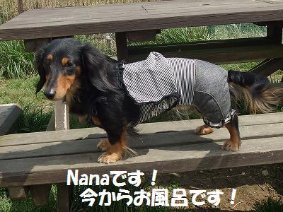 nanakumi.jpg