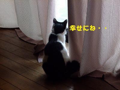 siawasenabay.jpg