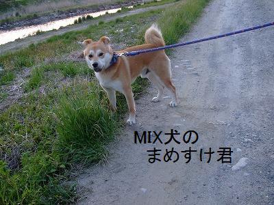 suzukimamesuke.jpg