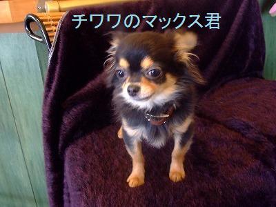 tiwawama.jpg