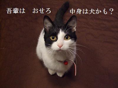 wagahai.jpg