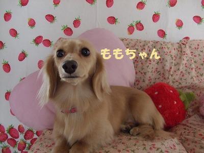 wanbri.jpg
