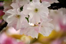 春日井 (かすがい)