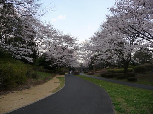 20100403sakura3.jpg