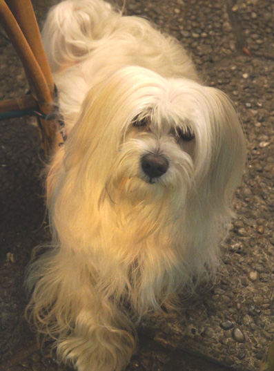 201202 dog niceDSC02674