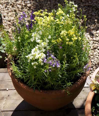 20120324 ヴェランダの花 14cm DSC05403