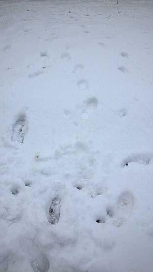 20130116 積雪 11cm 000