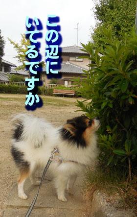 DSCN5778_20140919191140115.jpg