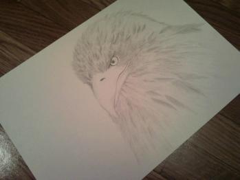 鉛筆画 オオワシ
