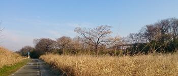 通勤風景7km地点