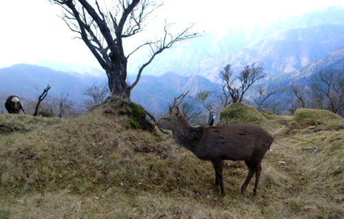 02-丹沢の鹿