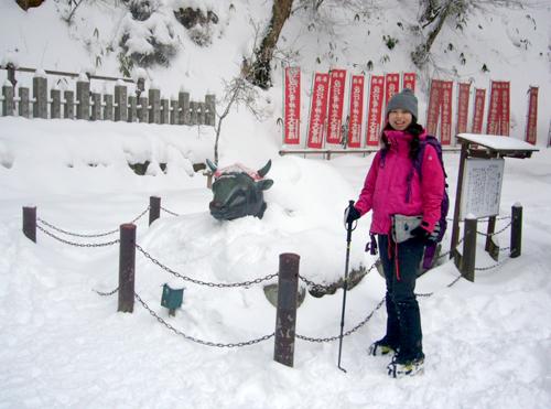 18金剛山雪に埋まった牛