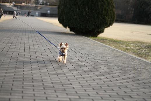 今日もお散歩