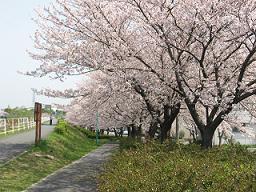 ご近所桜めぐり4
