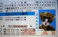 s-E381AAE38281E78CAB1.jpg