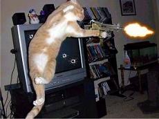 s-cat08012919002.jpg