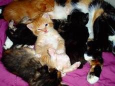 s-cat08013110018.jpg