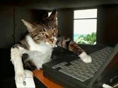 s-cat08013111071.jpg