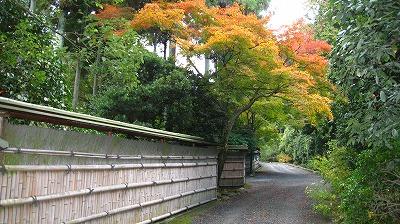 玄々庵の竹垣