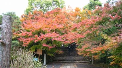 階段 紅葉