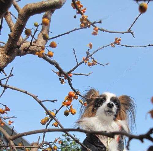 梅もどきとぱぴすけ