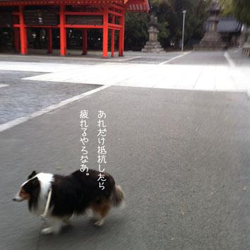 000_20120318002455.jpg
