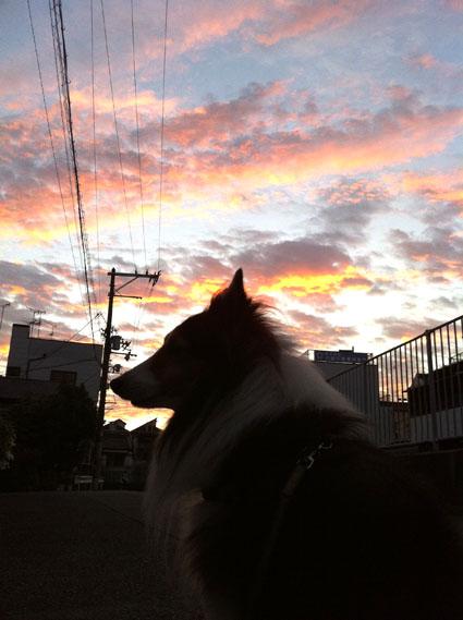 朝焼けの犬