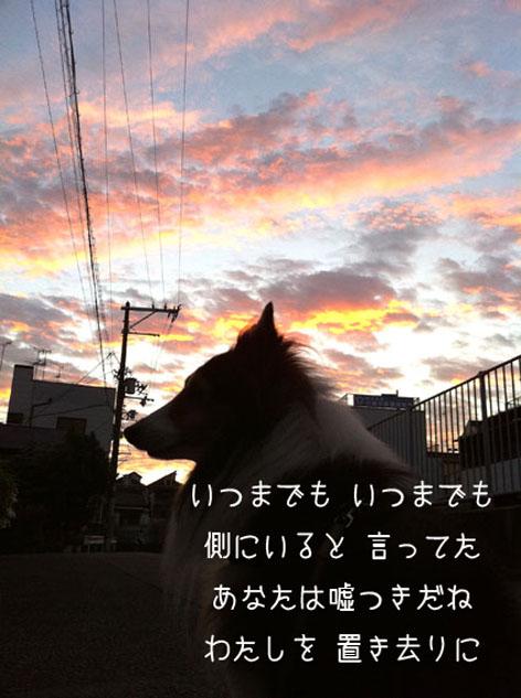 006朝焼けの犬