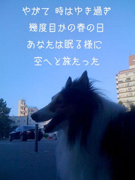 0005オオカミ