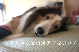 DSC00468_378.jpg