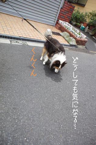 DSC01326_1871.jpg