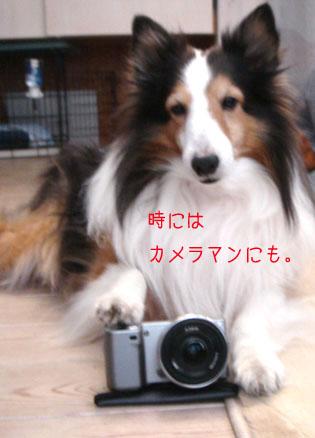 DSC01395_6985_20120119122533.jpg