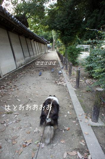DSC02306_24037.jpg
