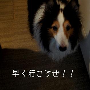 DSC02896_3915.jpg